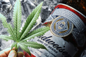 Budweiser-Tilray-Pot-Drinks